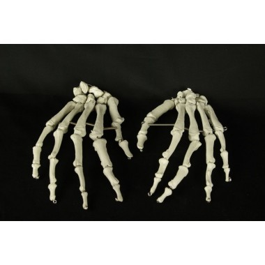 Skeleton Hands-Sold As A Pair