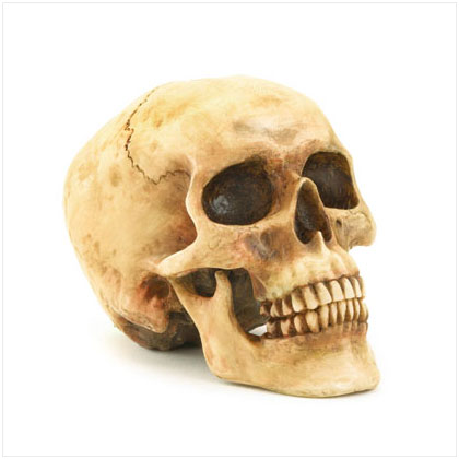 bloody human replica skull, Skeleton