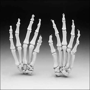 Skeleton Hands/Sold As A Pair