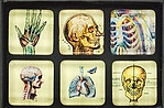 Anatomy/Skull Magnet Set