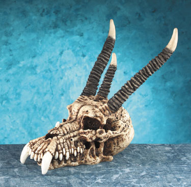 Dragon Skull-Small